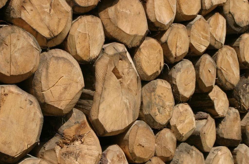 Esposizione a polveri di legno