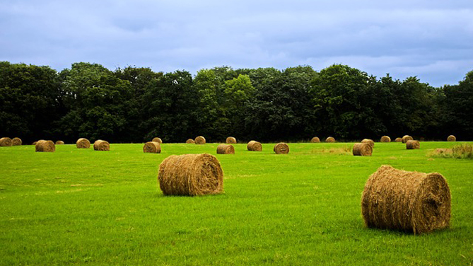 Disponibili i pieghevoli informativi relativi al Piano Nazionale Agricoltura